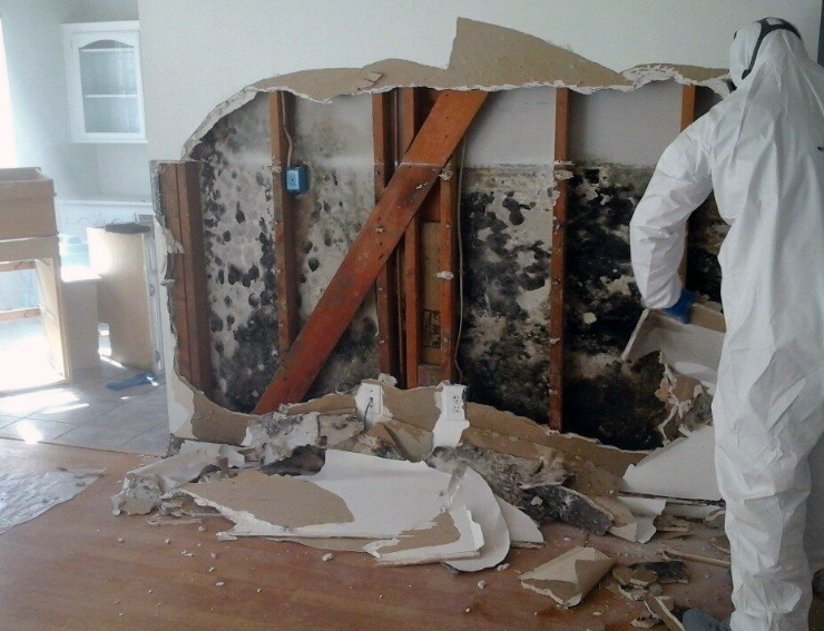 Mold Damage Cleanup & Remediation