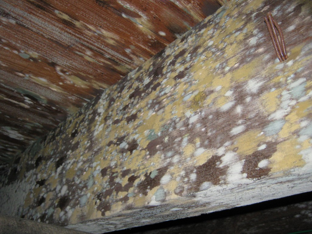 Attic Mold Cleanup Services