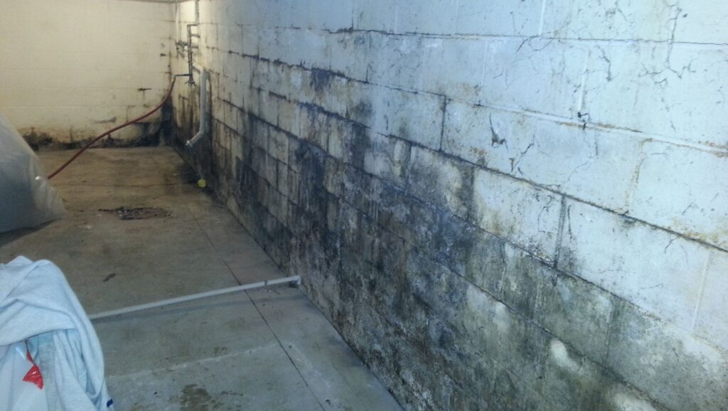 Basement Mold Removal Services